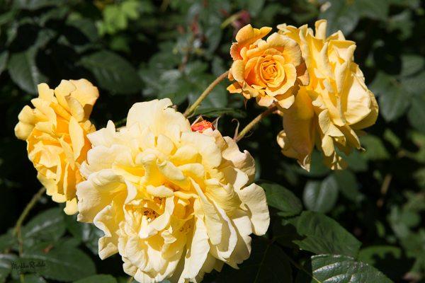 Kukkia kahdessa tasossa