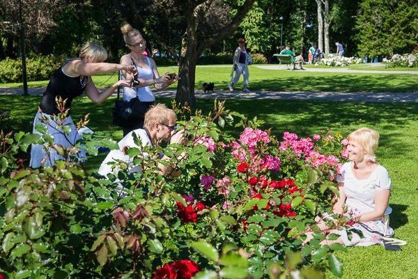 Ruusu- ja henkilökuvaa Hatanpään arboretumissa